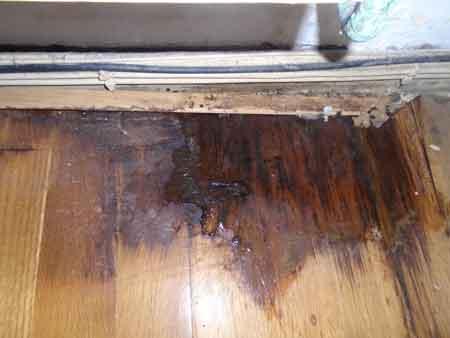 Water Damaged Wood Floor Needs Repair